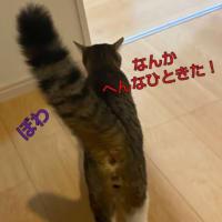 「ぼるしち猫の日」