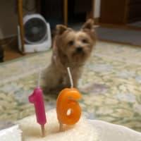 春花さん 16歳の誕生日