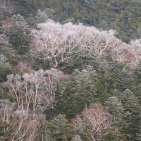 11月実践撮影塾  霧氷