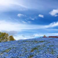 春の花に会いたくて〜