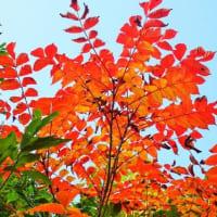 20-10.14blg:魚沼スカイラインの紅葉その三