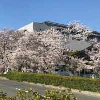 桜満開、新型コロナ下、今私たちに出来る事は?