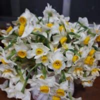 水仙は早春の香り
