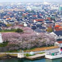やっと出逢えた♪ 海に咲く桜たち