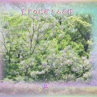『 寛ぎの塒探さん花樗 』遊行期游泳575zqv1806