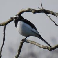 バードウォッチング Bird watching