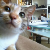 ねこ、ネコ、猫、(=^・^=)