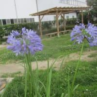 2019年7月16-17日の花