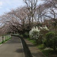 横浜フリーチャチャ✖ランニングで、免疫力UP!!