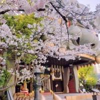難波八阪神社の桜