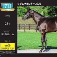 【サマーセール2021(Summer Sale)】~「電子ブック(e-book)」を公開