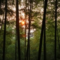 芦北での日の出