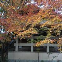 ミモロの紅葉散歩。谷を彩る紅葉…西国三十三所観音霊場札所の「今熊野観音寺」