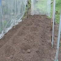 トマト苗植える