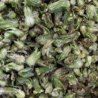 青紫蘇の実を初収穫