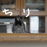 日本三景の日(7月21日)