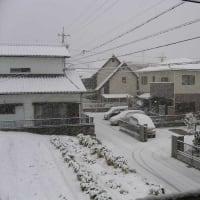今冬初の積雪