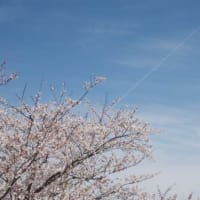 The last cherry blossoms of Heisei.