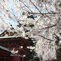 節度をもった行動を。そして、桜は混みあわないところで。