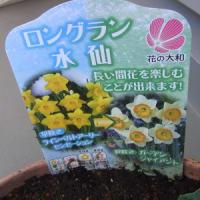 11/20 新しい寄植え鉢-F できました。