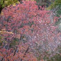 ●奥卯辰山健民公園 コブハクチョウ・コロちゃん ちょっとだけ紅葉 久しぶりの外食