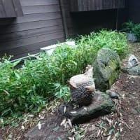 中庭の草刈りで大騒ぎ。。