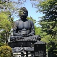 赤塚公園のニリンソウ