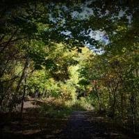 五天山の秋 パートⅠ