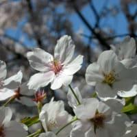 桜の園~その3
