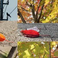 秋カラスの街路樹
