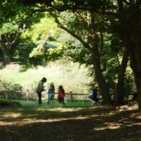 神無月もあとわずかとなった秋日和に、五十鈴川に出向く