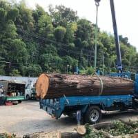 川崎の高木伐採。