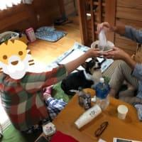20190713の猫たちと時々犬