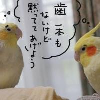 歯ヂカラ探究月間(9月1日~30日)