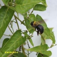 マユタテアカネ、ノシメトンボ、他、昆虫