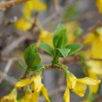 黄色いお花は