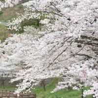桜巡礼 2020 VOL.2