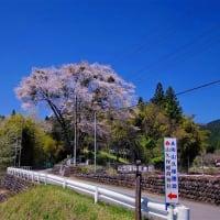4.21 日光市 山久保の大桜