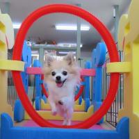 《愛犬のお食事セミナー》お申し込み多数につき午後の部開催決定しました!【ALOHA塾】  犬のしつけ教室@アロハドギー