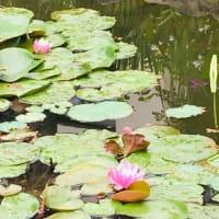 ツユクサ・ヒルガオ・・野の花はいつも元気(⋈◍>◡<◍)。✧♡