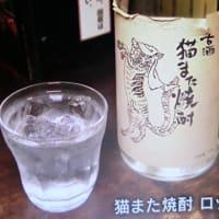 おすすめのお酒 『猫また焼酎』📷家飲み07-04