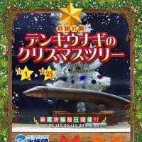 サンピアザ水族館特別公開!デンキウナギのクリスマスツリー開催中!のご案内!