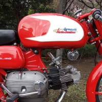 Aermacchi Ara verde early model