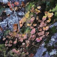 💖紅葉の石鎚山登山①・見た花