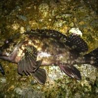 3/5 Half Night Collabo Fishing! 思い出の釣り