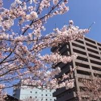 非特定営利活動法人 島根県障がい者就労事業振興センター ~MirRAiwa~スタート
