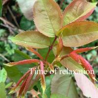 50代、久しぶりに庭にチャレンジ☆彡=私にとっての癒しの時間♪♪=【休日編】