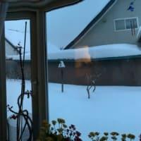 予報通り今日も雪の日ですよ