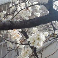 弥生三月★