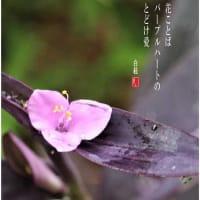 紫御殿/パープルハート